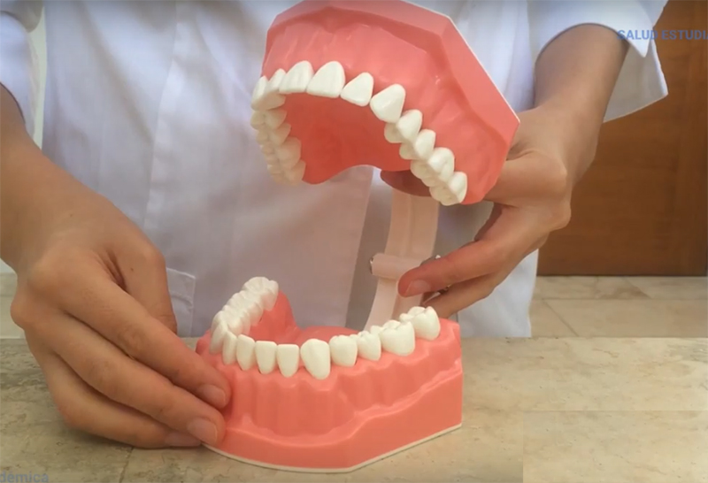 Recursos y técnicas para una correcta limpieza dental